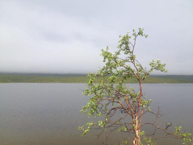 Stimmung am Kilpisjärvi in Lappland